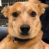 Adopt A Pet :: Skittles - Polson, MT