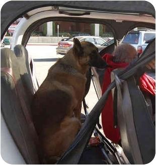 German Shepherd Dog Mix Dog for adoption in Los Angeles, California - Hans von Schwartzbaum