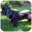 Photo 3 - Cocker Spaniel Dog for adoption in Oak Ridge, New Jersey - Niagara