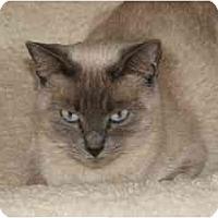 Adopt A Pet :: Alaska - Scottsdale, AZ