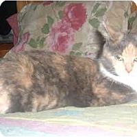 Adopt A Pet :: Thelma - Bedford, MA