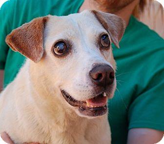Labrador Retriever Mix Dog for adoption in Las Vegas, Nevada - Mitzie