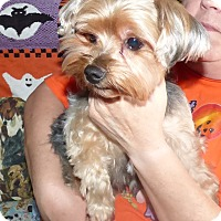 Adopt A Pet :: Britney - Conroe, TX