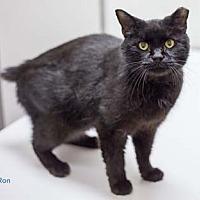 Adopt A Pet :: Ron - Merrifield, VA