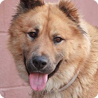Adopt A Pet :: Jenkins von Jever - Los Angeles, CA