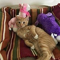 Adopt A Pet :: Simon - Sistersville, WV