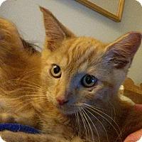 Adopt A Pet :: Tommy - Toms River, NJ