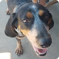 Adopt A Pet :: Annie - ST LOUIS, MO