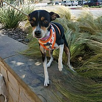 Adopt A Pet :: Lana - Hamilton, ON