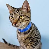 Adopt A Pet :: Tommy - oakland park, FL