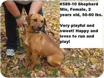 Shepherd (Unknown Type) Mix Dog for adoption in Zanesville, Ohio - # 589-10 @ Animal Shelter
