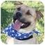 Photo 1 - Labrador Retriever/Shar Pei Mix Dog for adoption in Auburn, California - Rudy