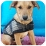 Photo 3 - Labrador Retriever Mix Puppy for adoption in El Cajon, California - ERNIE