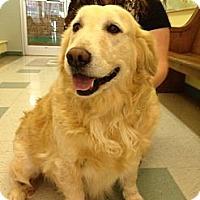 Adopt A Pet :: Ginger - Brattleboro, VT