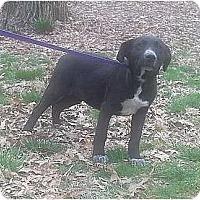 Adopt A Pet :: Glacier - Plainfield, CT