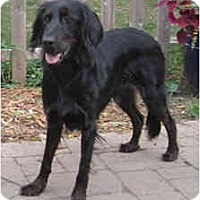 Adopt A Pet :: Lucy - DeKalb, IL