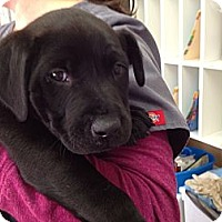 Adopt A Pet :: Everest - Cumming, GA