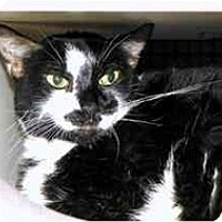 Adopt A Pet :: Mimi - Alexandria, VA