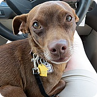 Adopt A Pet :: Murdock - Schenectady, NY