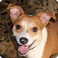 Adopt A Pet :: Tater Tot - Chapel Hill, NC