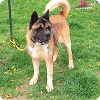 Adopt A Pet :: Ranie - Springfield, IL
