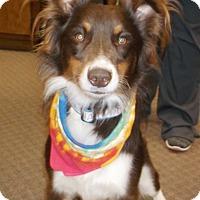 Adopt A Pet :: Roper - Hillsboro, IL