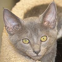 Adopt A Pet :: Jenga - San Leon, TX