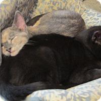 Adopt A Pet :: Lupita - Plattekill, NY