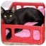 Photo 3 - Domestic Shorthair Cat for adoption in Houston, Texas - Maggie