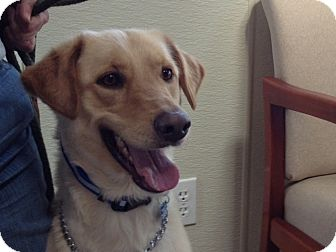Labrador Retriever Mix Dog for adoption in Rockaway, New Jersey - Duke