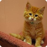 Adopt A Pet :: Emma #2 - Lunenburg, MA