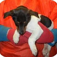 Adopt A Pet :: Reed ADOPTED!! - Antioch, IL