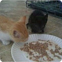 Adopt A Pet :: Wilma - Mobile, AL