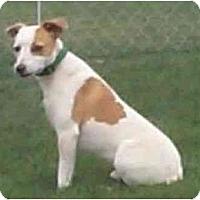 Adopt A Pet :: Radar - Scottsdale, AZ