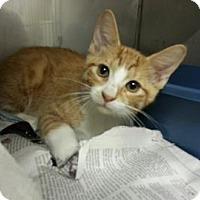 Adopt A Pet :: Cyrus - Miami, FL