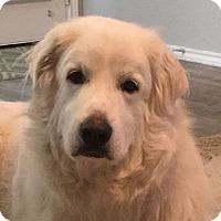 Adopt A Pet :: Dutch - Austin, TX