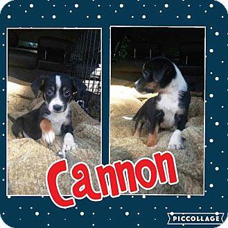 Hound (Unknown Type) Mix Puppy for adoption in Cranston, Rhode Island - Cannon