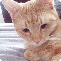 Adopt A Pet :: Klover - North Highlands, CA