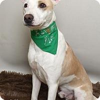 Adopt A Pet :: Bobby - Kerrville, TX