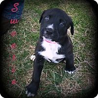 Adopt A Pet :: Sweetie - Denver, NC