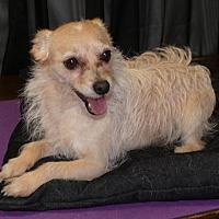 Adopt A Pet :: Bentley - REDDING, CA