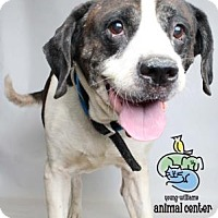 Adopt A Pet :: Tutles - Knoxville, TN