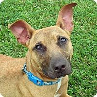 Adopt A Pet :: June - AUR, IL