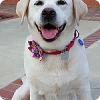 Adopt A Pet :: Lizzie May - Torrance, CA