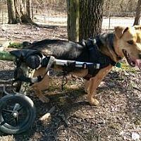 Adopt A Pet :: Loni - Crocker, MO