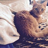 Adopt A Pet :: Sharee - New York, NY