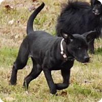Adopt A Pet :: Cricket - Clinton, ME