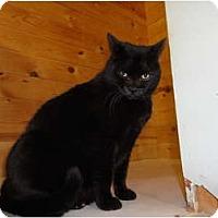 Adopt A Pet :: Marlon - Kingston, WA