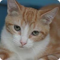 Adopt A Pet :: Tangerine - Canoga Park, CA