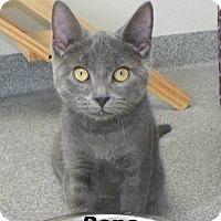 Adopt A Pet :: Reno - Dover, OH